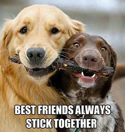 best-friends-stick