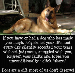 dogs-are-a-gift