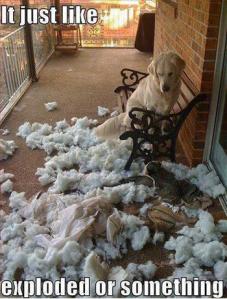 dog-exploded