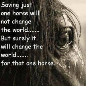 horse change
